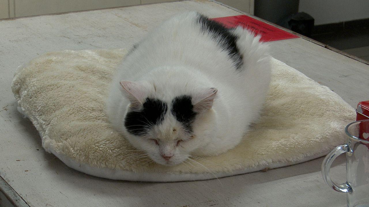 Katten komen, maar gaan nauwelijks bij dierenopvang Hokazo