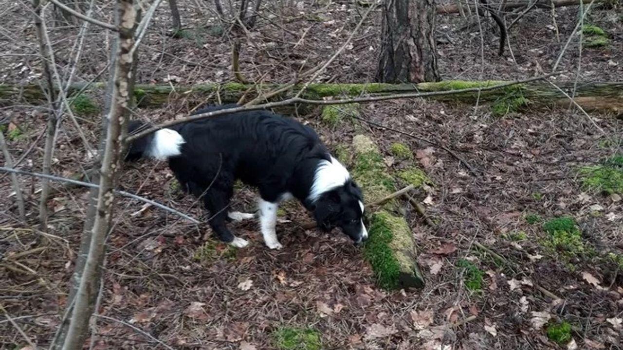 Hondenbescherming waarschuwt hondenbezitters na incident in Herperduin
