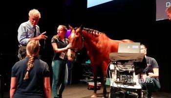 Er staat een paard in de gang, bij Markant in Uden