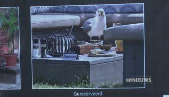 Wilde dieren en ongerepte natuur in het Jan Cunenpark: 'Het is heel leuk om te exposeren'